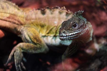 animals amphibious: The image of a lizard