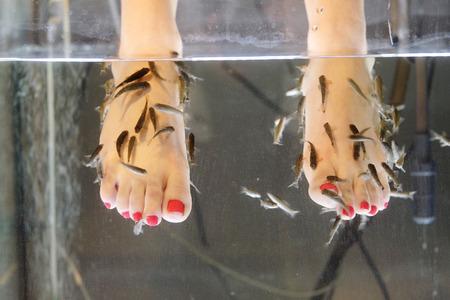 魚の剥離のイメージ