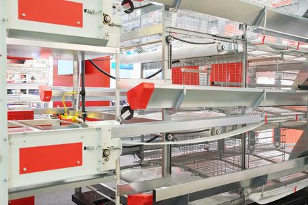 polyethylene film: the image of automatic packing conveyor