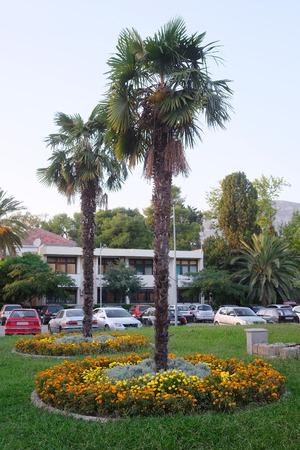 montenegro: Palm trees in Bar, Montenegro
