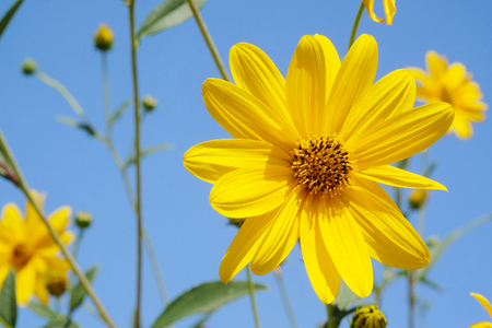 hand jamming: Close-up yellow flowers on a background of blue sky