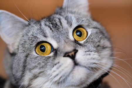 cola mujer: La imagen de un gato de cerca Foto de archivo