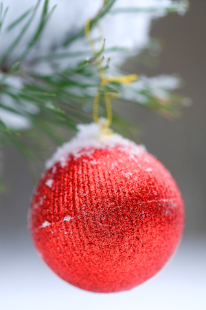 Red ribbon on the christmas tree  Stock Photo