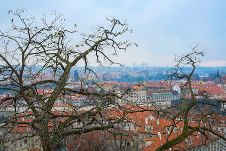 family units: Prague, Czechia - November, 21, 2016: panorama of a historical part of Prague, Czechia, with a tree on a frontgroung,