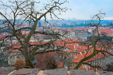 Prague, Czechia - November, 21, 2016: panorama of a historical part of Prague, Czechia, with a tree on a frontgroung,