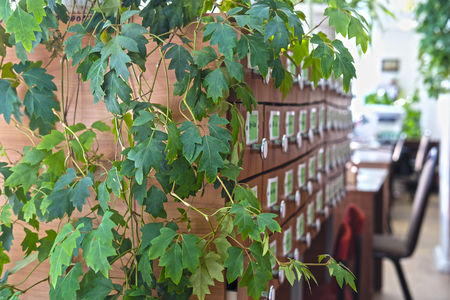 Green branches of an ivy surround the book catalog in library