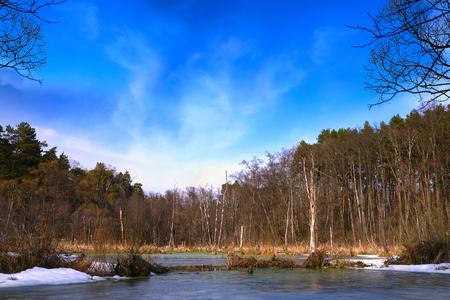 sky brunch: Landscape with the image of spring forest and fog