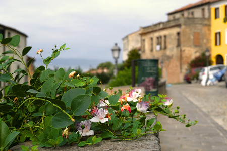 Flower in a hotbed in Monselice, Italy