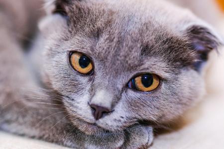 Pretty kitten close up