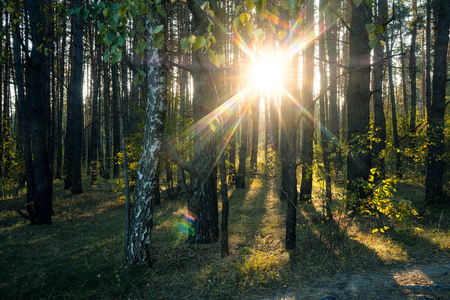 Sun shines from the trees