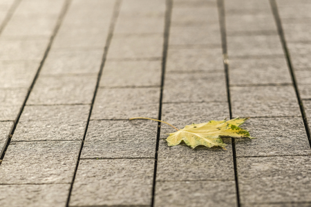 The image of an autumn leaf on a sidewalk Imagens - 111341947