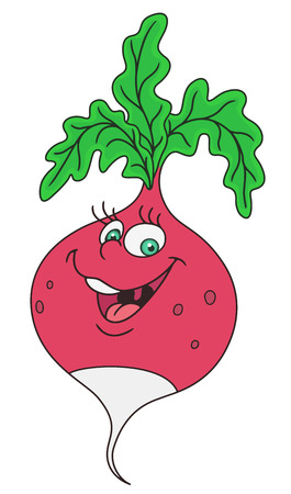 Fresh radish cartoon Illustration
