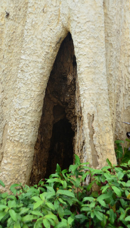 hollow tree: Tree hollow at the foot