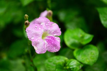 White and light violet moisted flower photo