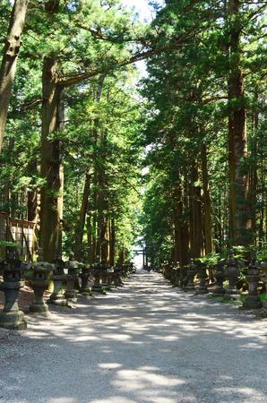 dimly: Dimly sunny walkway between pine garden