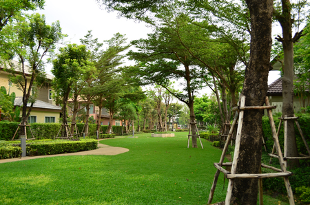walkway: Fresh green garden and walkway