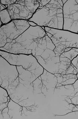 leafless: Leafless branch - black and white theme