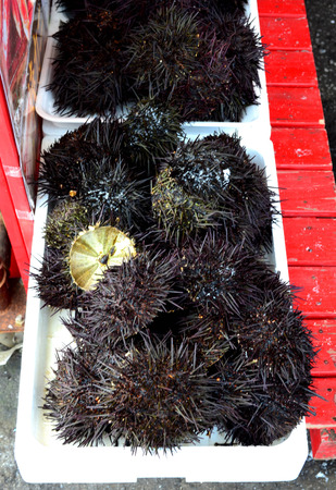 danger box: Fresh sea urchin in ice box