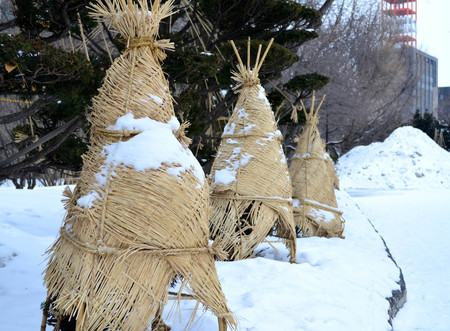 frost bound: Pine wrapped with weave mat and rope for snow protection in winter