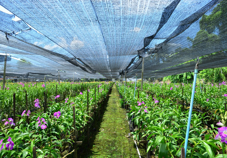 Orchid plant farm - agriculture and business concept