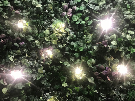 Beautiful wall from various artificial creeper plant with illuminated light bulb for background