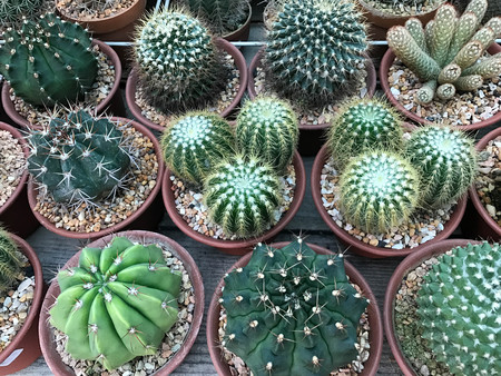 Group of various type  cactus in plant shop