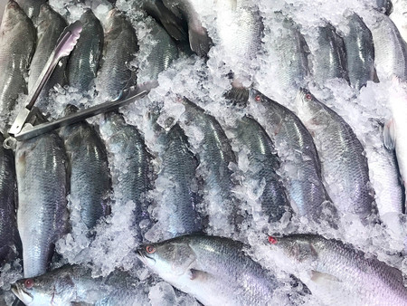 Fresh Giant Sea Perch Fish on ice for sale in food market