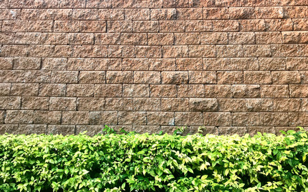 Brown weathered brick wall with green plant shrub Stock fotó