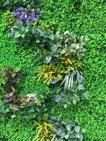Beautiful wall from various artificial creeper plant for background Stock fotó