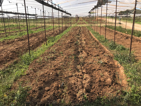 Empty prepared soil under greenhouse nursery for new plantation, agriculture concept