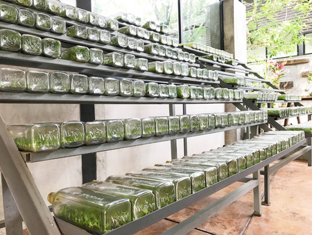 Row of orchid or plant tissue culture or lab in glass bottles on metal shelf, botany and biotechonology concept