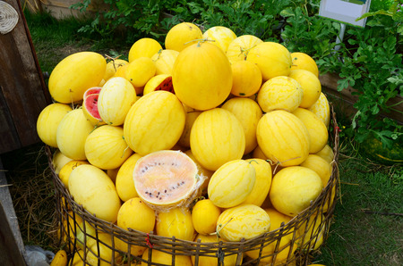 Pile of red watermelon with yellow shell in wicker basket Stock fotó