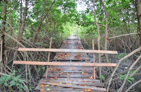 Wooden bridge walkway with barrier in mangrove forest