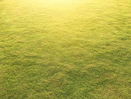 Light fresh green grass turf under sun light fot background and texture