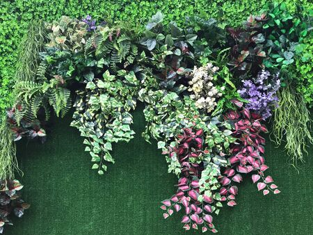 Beautiful wall from various artificial creeper plant for background Stok Fotoğraf
