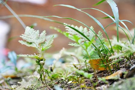 phukradueng: Little fern in a vast forest Phukradueng Loey Thailand