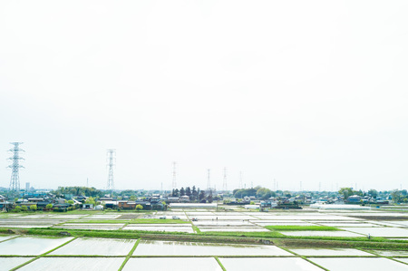a landscape of rice-planting