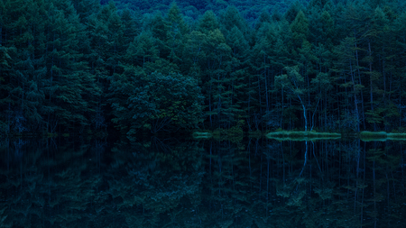 Trees reflected from the lake 写真素材