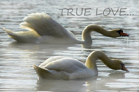 True Love Stock Photos Royalty Free True Love Images