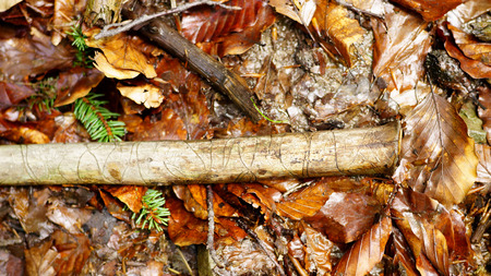 Stick with hollowed cuts through woodworms. A beautiful natural pattern in wood.