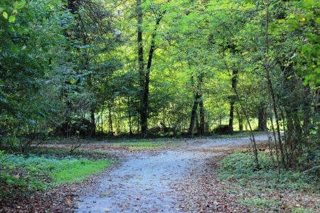 penumbra: woods Stock Photo