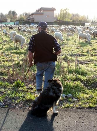 cattle guard: herd Stock Photo