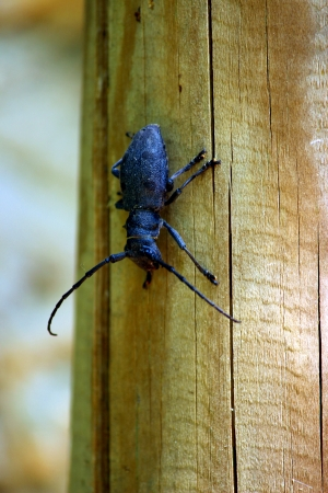 the antennae: insect with antennae