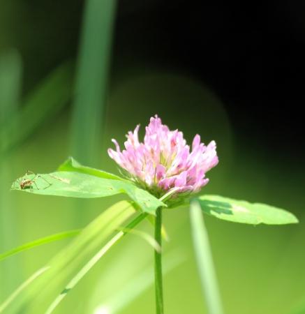 foglia: fiore Stock Photo