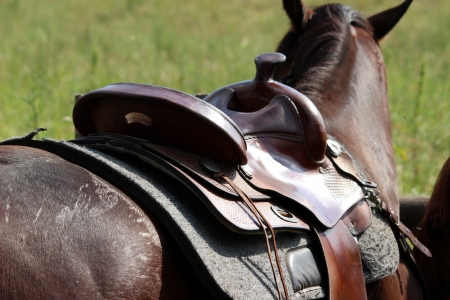 cowboy on horse: saddle Stock Photo
