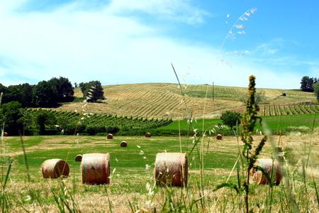 hay field: campo di fieno Archivio Fotografico