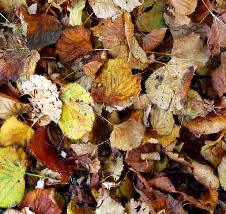 yeşillik: yeşillik Stok Fotoğraf