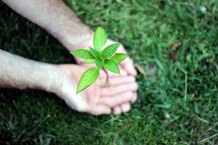 plant hand: little plant in the hand