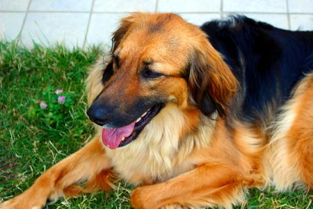 face guard: dog in the garden