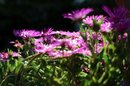 ornamental bush: ornaments flower Stock Photo